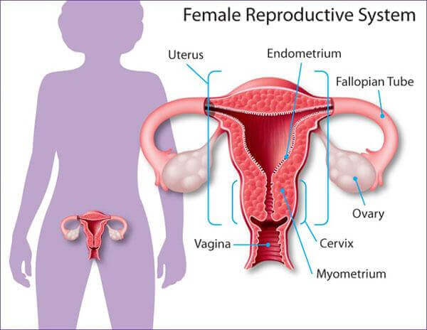 Process And Side effects of an ovarian cyst removal